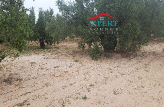 une petite ferme de 4 hectares et 6000 m² à kondar