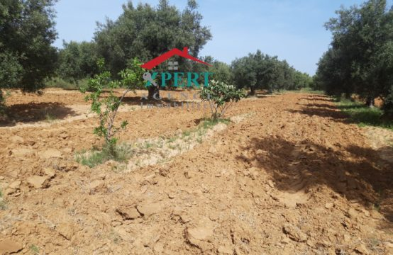 une petite ferme de 4 hectares et 6000 m² à kalaa kebira